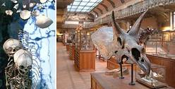 Galerie d'Anatomie Comparée