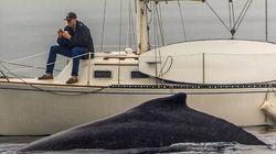 Phone vs whale